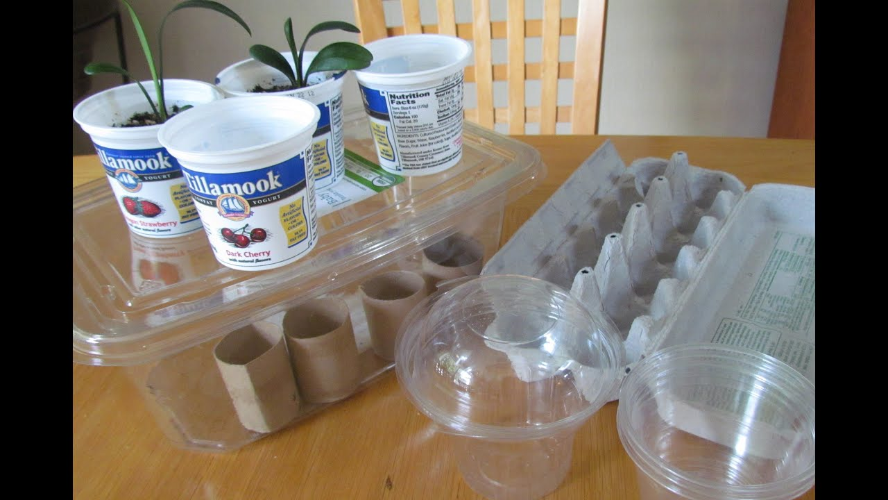 Reusing Toilet Paper Tubes, Food Containers for Seedlings Organic Gardening - YouTube