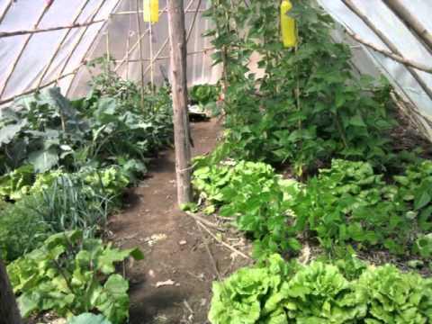 Invernadero casero total 2 youtube for Plantas para invernadero