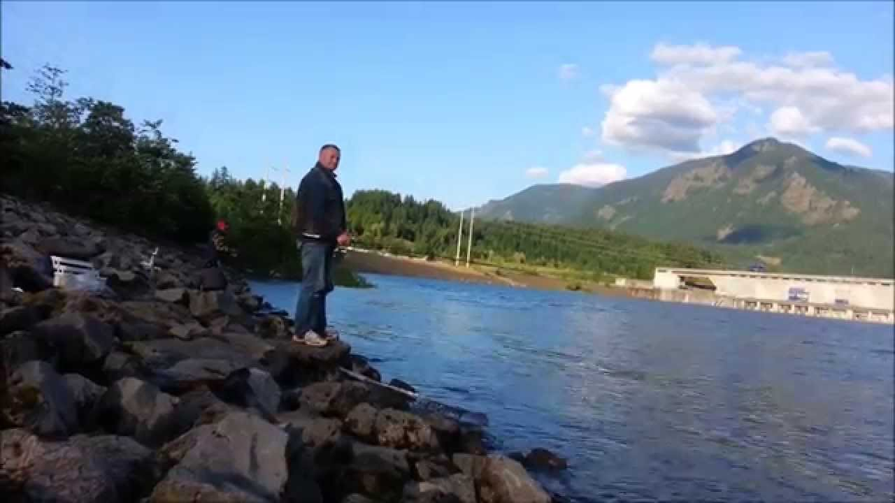 Bonneville dam shad fishing 2014 youtube for Bonneville dam fish count