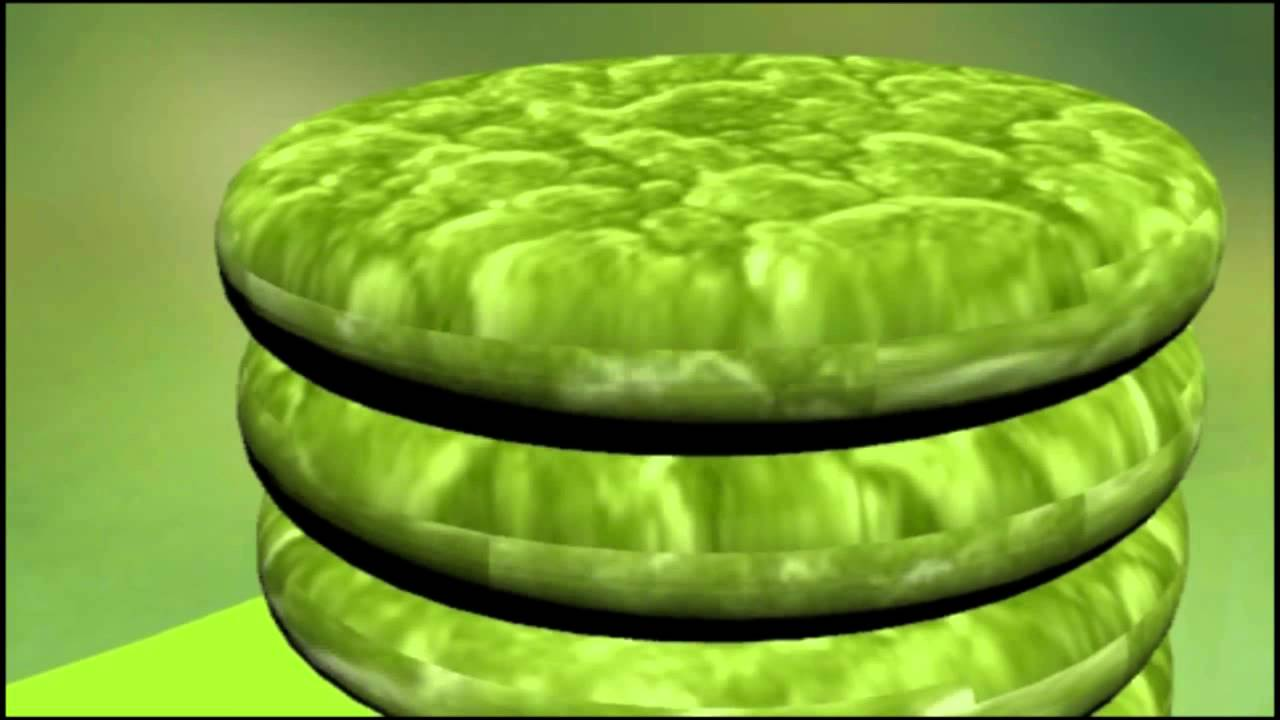 Chloroplast Animation