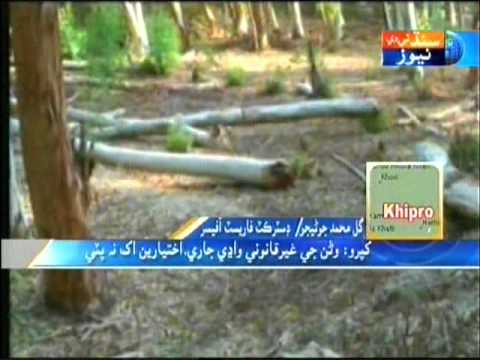 Khipro Forest Sindh Tv News Story Part .3 video