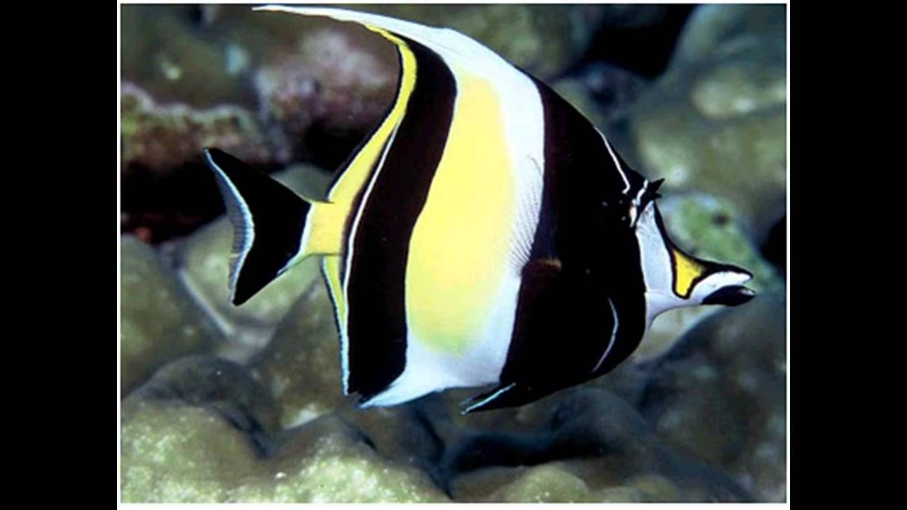 Top 10 most beautiful and expensive fish in the word 2013 for Most expensive aquarium fish