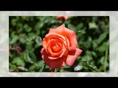 Valle del Oro RV Resort Rose Garden 2014