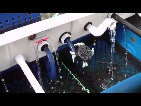 Diy Hydroponic System In Aquaponic Greenhouse