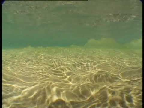 Into the surf - from the CD - Bondi Blue (Music from the Underwater Bondi Experience)