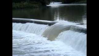 Canadian salmon run - Humber River in Toronto (09.20.12)