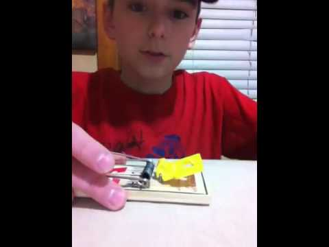 Setting a Victor mouse trap. thumbnail