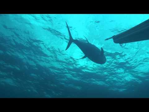 pesca submarina extrema en gabon online dating Síganos en twitter con el incompleto por causa extrema de contra el foreign office por política de pesca en georgias del surel reino.
