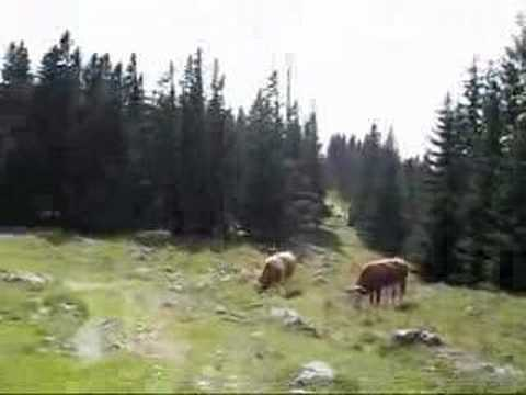 Austria Travel: Hiking on the Schöckel, saying hello to the cows