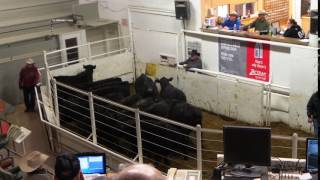 2017 Calves selling