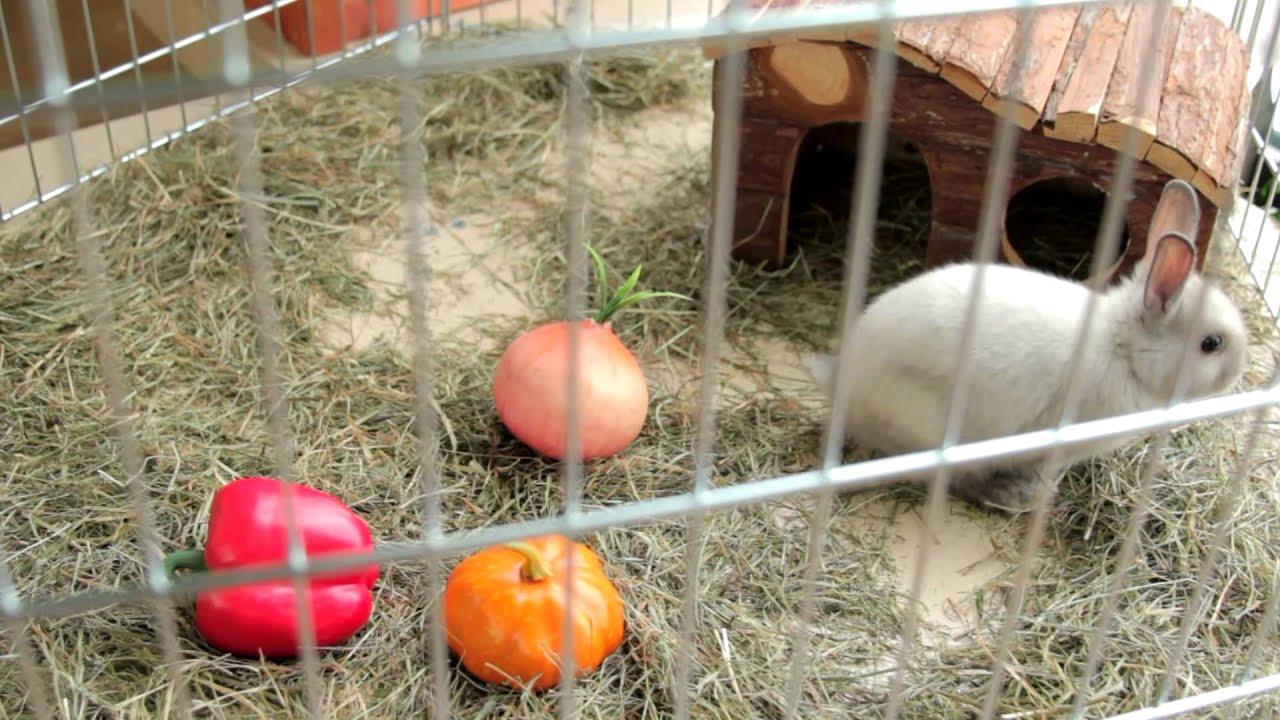 Чем кормить декоративными кроликами в домашних условиях 930