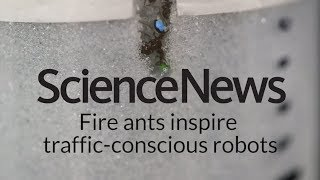 Fire ants inspire traffic-conscious robots | Science News
