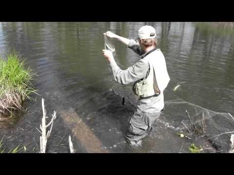 как ловить сетью на реке видео