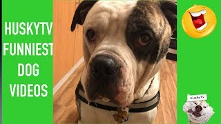 Most Funniest Pet & Dog Animal Videos of the Week December 2018 | Compilation Funny Dog Videos