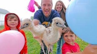 The Blonde Emu GENDER REVEAL