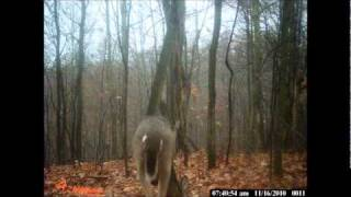 Trail cam pics from a wildgame innovations IR4 in west virginia