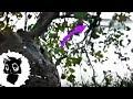 5 РЕАЛЬНЫХ ФЕЙ СНЯТЫХ НА КАМЕРУ  [Черный кот]