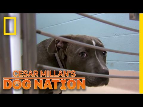 Comforting a Scared Dog | Cesar Millan's Dog Nation