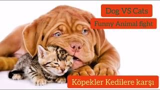 Funny cat and dog videos