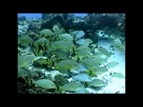 Caribbean Coral Reef Fish