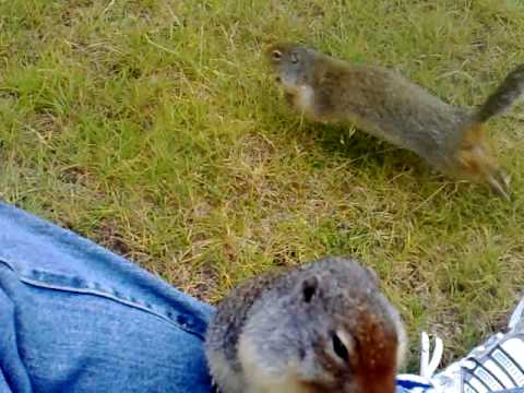 chipmunk eating cheesies