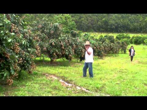 Longan Organic Farms