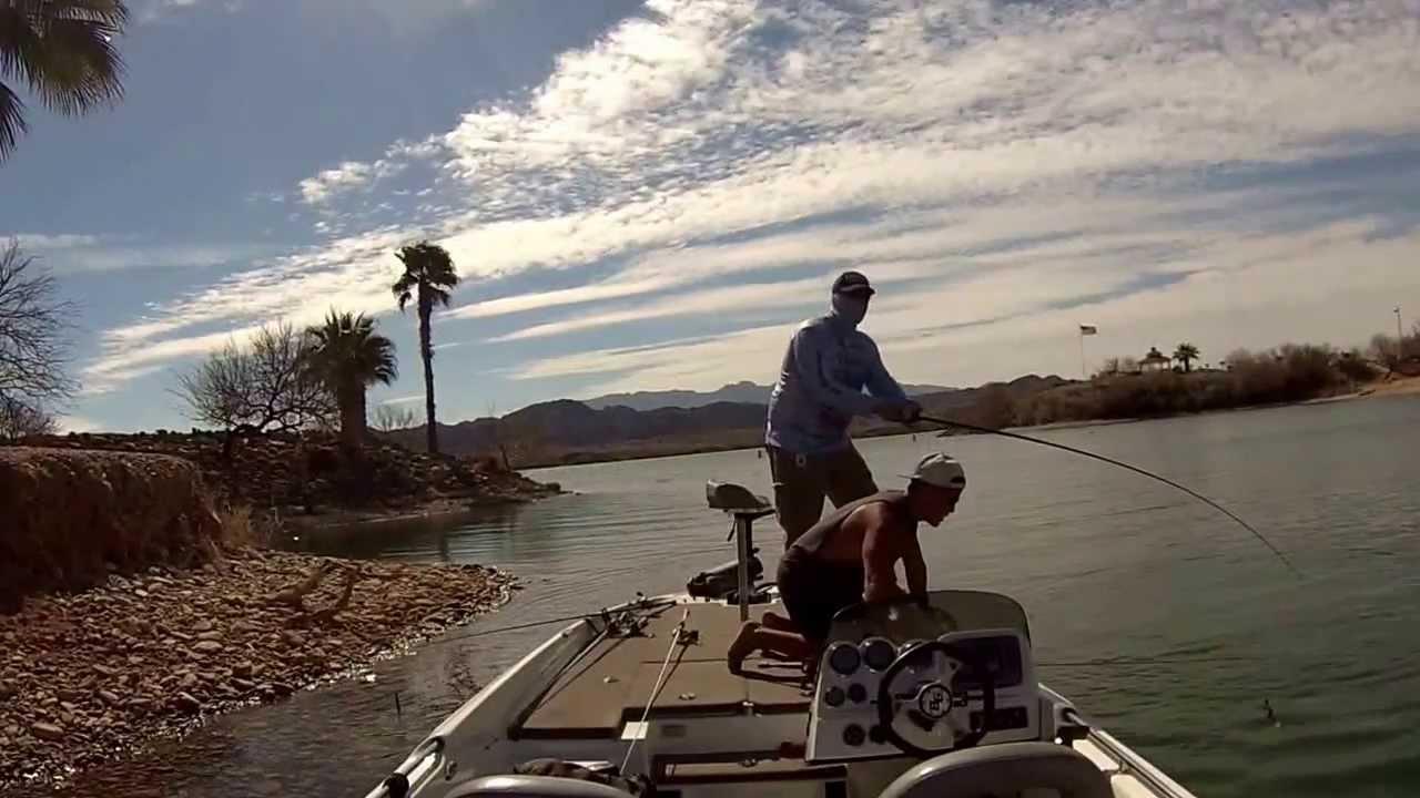 Lake Havasu Bed Fishing With Randy Cnota Youtube