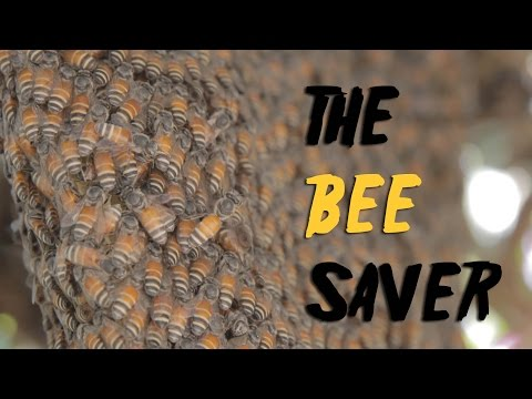 The Bee Saver | World Environment Day Special | Channel NewsAsia Connect