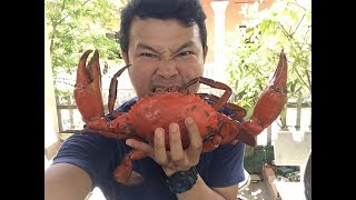 Cua thịt khổng lồ 1.1kg ăn phê như thế nào ???? || Eating a Huge Mud Crab