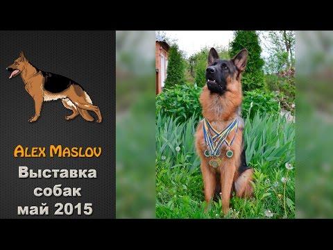 Выставка собак Best Dog