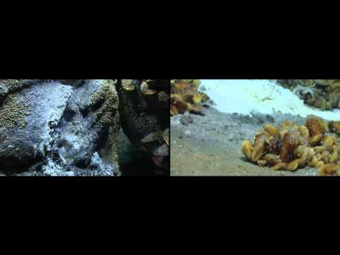 chemosynthesis in the deep sea ♦ chemosynthesis it occurs thousands of meters deep in the sea at the sea floor or the ocean basin, usually in close proximity of hydrothermal vents that contain.