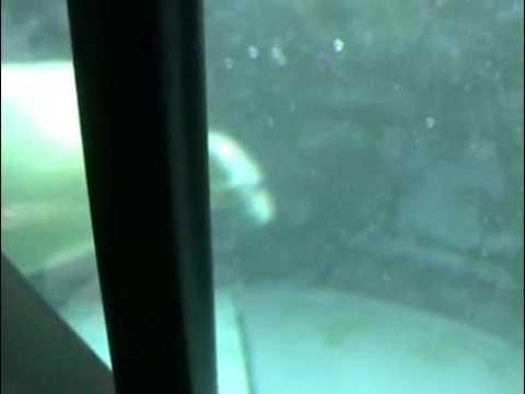 旭山動物園ホッキョクグマ館のシロクマ  Polar Bear in Japan