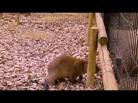 埼玉県こども動物自然公園の犬風仔カピ