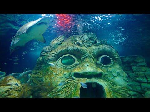 Sydney Sea Life Aquarium! One of must visit places in the world...