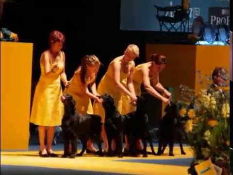 Dog World 2008 World Dog Show Winner Best