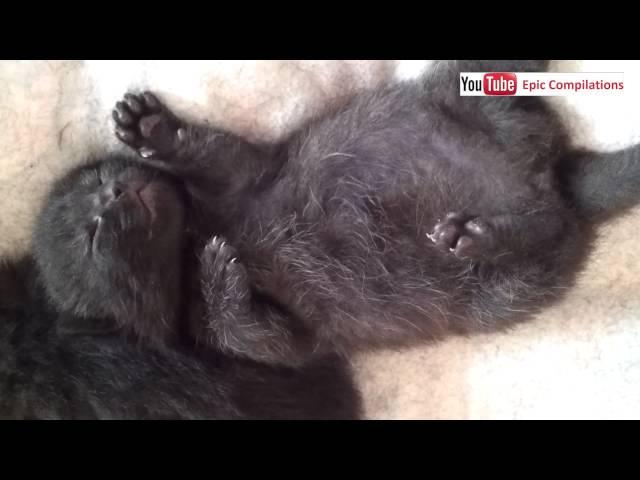 One week old kitten is dreaming while it sleeps - so cute...