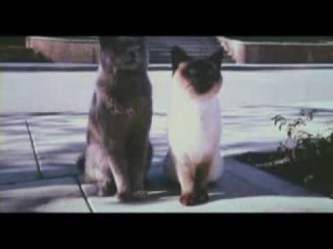 Эй толстый прикол с котами