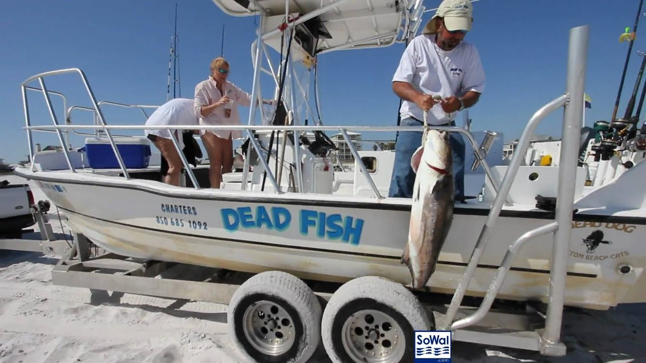 A cobia day with dead fish charters in grayton beach for Grayton beach fishing charters