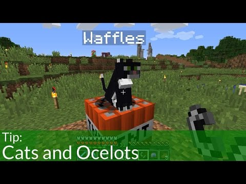 Tip: Cats and Ocelots in Minecraft