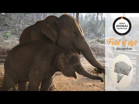 1. december: Fold en elefant