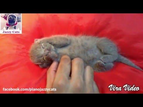 Jazzy Cats - Buồn ngủ quá đừng cù léc con nữa (Hello everybody, I'm Zulu - 12 days old)