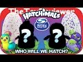 Hatchimals Eggs Pengualas & Draggle Hatching Day Spin Master ...