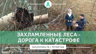 Захламленные леса - дорога к катастрофе