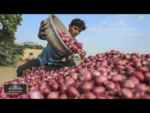 Red Onion Crop Loss Reduces Karnataka Farmers to Tears