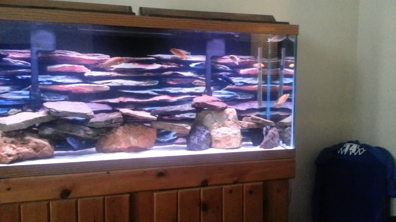 Best 55 Gallon African Cichlid Tank Ever Youtube