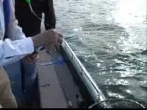 Bull Shoals Part 2, Crappie Fishing on Outdoors In The Delta