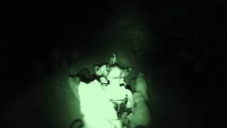 Dog Entertainment - Dog Relaxation - Dog Music - Our husky dogs Midnight Mushing