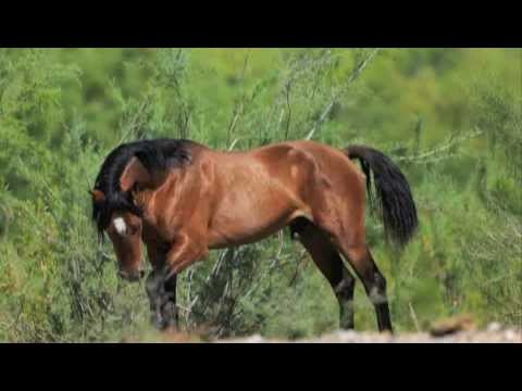 Wild Horses: Documentary of our American Heritage. By Christa L. Pynn Music Videos