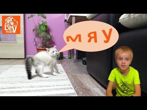 🐈VLOG (Со звуком!!!) У #LevMan появилась кошка #Мурка