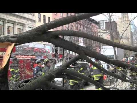 Tree Down On Montague Street in Brooklyn Heights